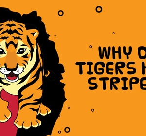 why are tigers disapperaing Save forests, save tigers habitat loss and fragmentation is another important reason why tigers disappearing without a safe and healthy home for tigers and their prey, neither can survive in the wild.