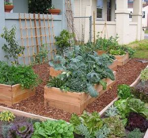 The basics of growing an edible garden at home by olivia The secret garden kitchen nightmares