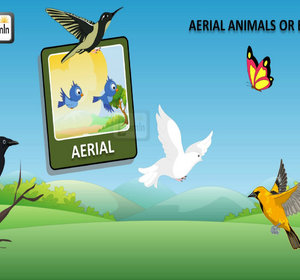 Birds Video For Kids Aerial Animals By ELearnin