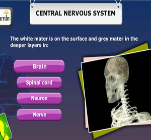 essay questions on central nervous system Chapter 7: autonomic nervous system cns = central nervous system question: we will write a custom essay sample on any topic specifically for you for only.