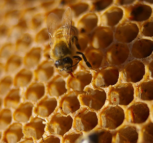 How to Keep Raw Honey Safe and Pure by ifoodiee | ifood tv