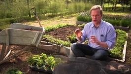 How To Protect Plants From Sunburn