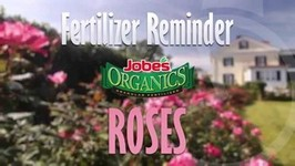 Reminder to Feed your Roses