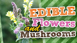 Picking up Edible Flowers and Mushrooms - Back at Debbie's Farm