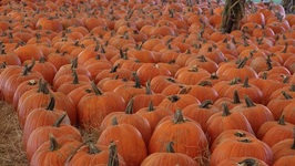 Pumpkin Festival/ Hunsader Farms