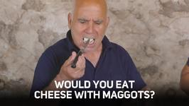 Maggot munching: a Sardinian cheese secret