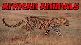 African Animals - Learning African Animals For Kids