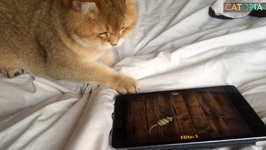 iPad the cat Episode 1