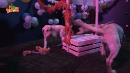 Crazy Puppies Dance Party - Funny Puppy Video