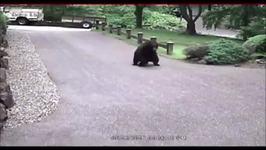 Dog Scares Off Bear Prowling Near Woodinville, Washington, Home