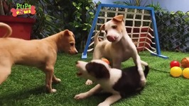 Adorable Naughty Puppies - Funny Fight
