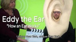 Eddy The Ear - How Hearing Works