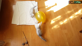 relaxJuly 02 - Kittens and balloons