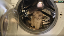relax July 01 - Dont put your kitten in the washing machine