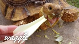 OMG Turtles - Try Not to Aww Challenge