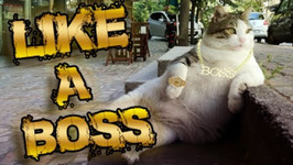 Thug Life - Like a Boss Special