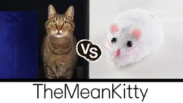 Mean Kitty VS Remote Control Mouse Toy