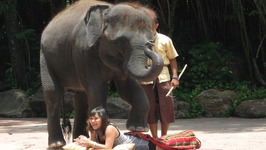 Thai Elephant Massage - The World's Greatest Body Massage - Elephant Massage in Phuket Thailand