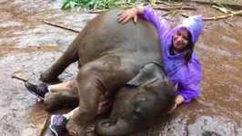 West Virginia Woman Rolls About With Playful Baby Elephant in Thailand
