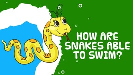Interesting Facts About Reptiles - How Are Snakes Able To Swim