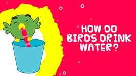 How Do Birds Drink Water - Science Facts For Kids