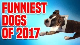 Funniest Dogs of 2017 - Funny Dog Compilation