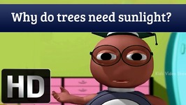 Why Do Trees Need Sunlight - Interesting Facts About Plants
