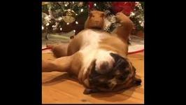Adorable Pets Show Off Their Christmas Spirit