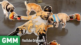 Covered in Peanut Butter and Pugs - THAT'S A BAD IDEA