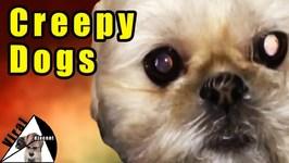 Creepy Dogs - Man's Best Frightening Friend