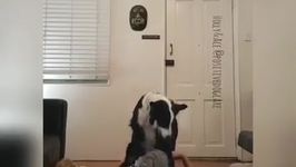 Daring Dogs Show Off Their Acrobatic Skills