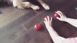Clever Pooch is a Master at cup Game