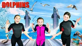 All About Dolphins  Fun Dolphin Facts for Kids!