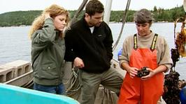 S01 E01 - Nova Scotia Mussels - Fresh & Wild