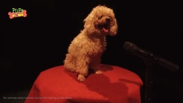 Dog Singing Opera - Puppies Got Talented