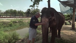 S01 E03 - Elephants - Animal Rescue Thailand