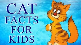 Cats - Interesting Facts about Cats And Kittens - Animals For Children - Kids Science
