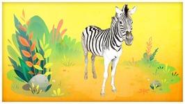 He is a Zebra