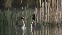S01 E01 - Kingfisher - Returning the Wild