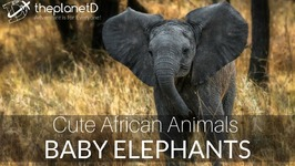 Baby Elephants and Cute Animal Moments of Africa