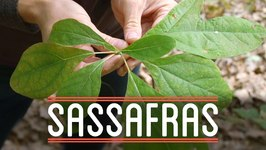Sassafras - How To Make Everything- Root Beer Float (5/7)