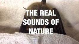 The Real Sounds of Nature