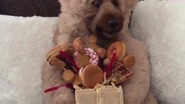 This Spoiled Goldendoodle Enjoys a Junk Food Bouquet