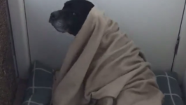 'Burrito Dog' Enjoys Wrapping Himself Up in His Blanket
