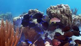 S01 E13 - Aquarium Part 1 - Aqua Team