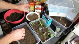 Seed Starting Tomatoes/Peppers Indoors-Setting Up The Starting Mix And Tray, Planting