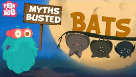 Bats Myths Busted The Dr. Binocs Show Learn Videos For Kids