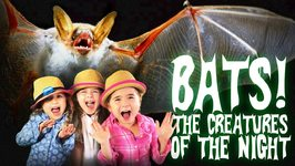 Bats for Kids - All About Bats - Bats- The Creatures of The Night