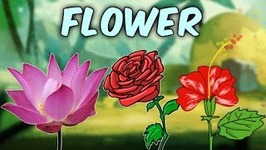 Learn English Flower Names With Pictures - Characteristics Of Different Flowers - Educational Videos