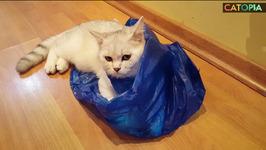 September Funny 10 Blue Bag Cat Shuffle